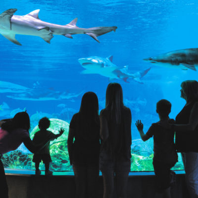 OdySea Aquarium – Certified Autism Center